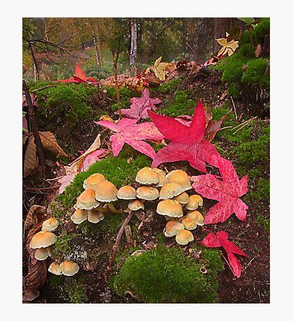 Autumn Floor Photographic Print