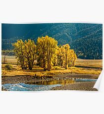 LAMAR VALLEY IN SEPTEMBER Poster