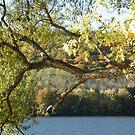 Autumn In The Ramapos by joan warburton