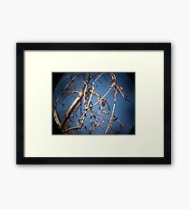Photo 2.2: Songs of Distant Earth Framed Print