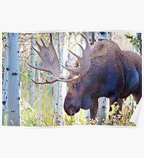 Sad Ending For A Stunning Bull Moose Poster