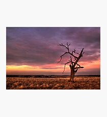 Dead Lonely Photographic Print