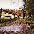 autumn stream by prawnie