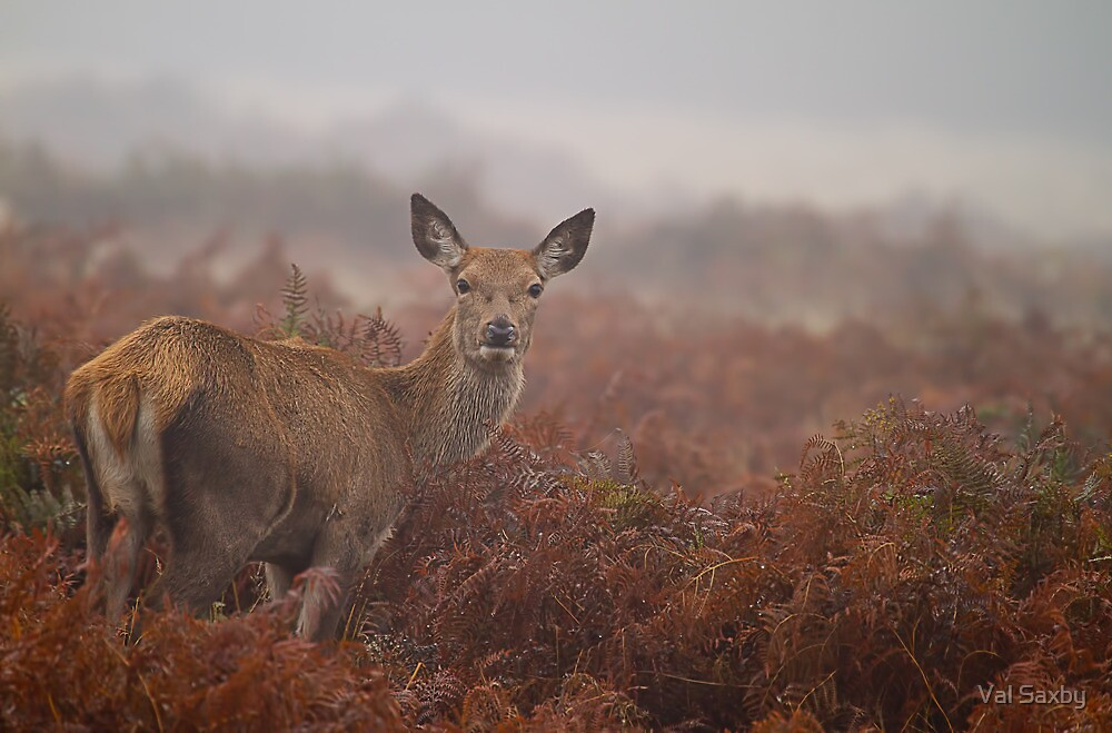 Lovely Lady by Val Saxby