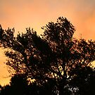 Olive Tree Silhouette At Sunset by Kuzeytac