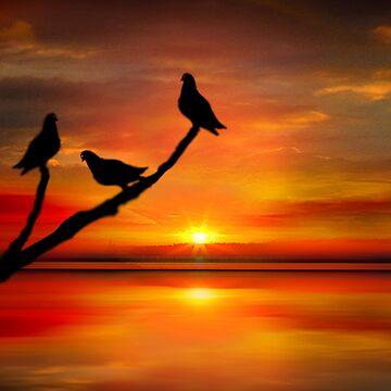 Birds at Sunset point-2 by sirgulamhusain