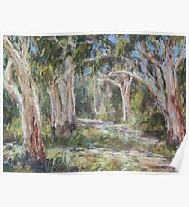 Lake Innes Nature Reserve 2 - plein air Poster
