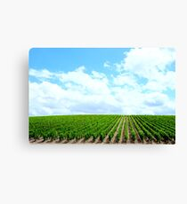 Vineyard Canvas Print