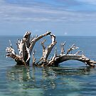 Driftwood in Lagoon by Reef Ecoimages
