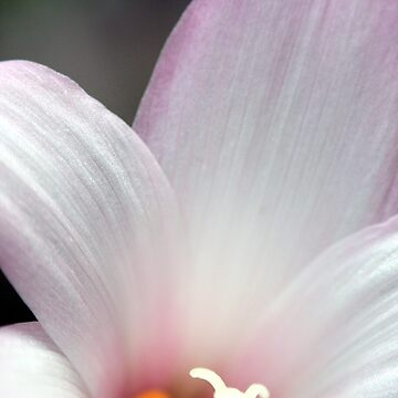 Petals by gregAllore