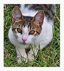 Croatian Kitty Photographic Print