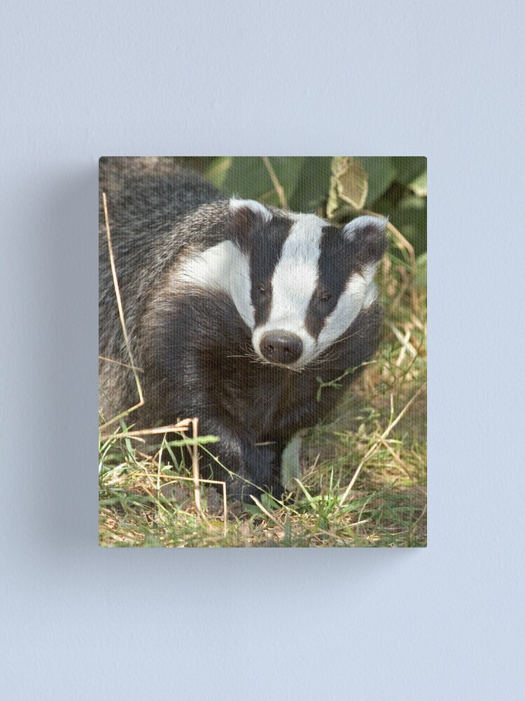 Alternate view of Being a badger Canvas Print