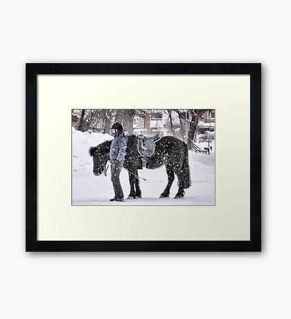 Snowy horse Framed Print