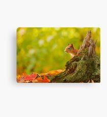 Red Squirrel Peek-a-boo Canvas Print