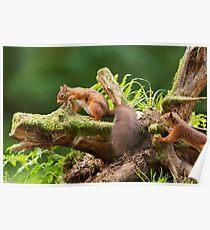 Red Squirrel Ambush Poster