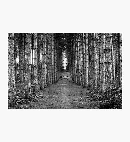 The Quiet Walk Photographic Print