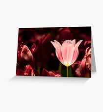 Glowing Tulip Greeting Card