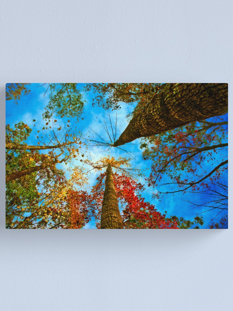 Alternate view of Up! Canvas Print