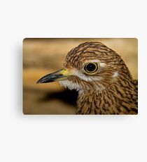 Thick Knee Canvas Print