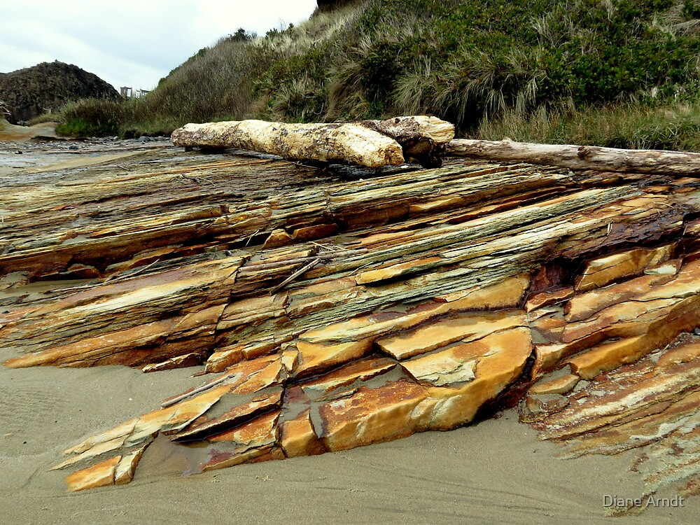 Petrified...Between Seal Beach and Waldport, Oregon by Diane Arndt