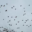 sparrow circles by Hannah STICKNEY