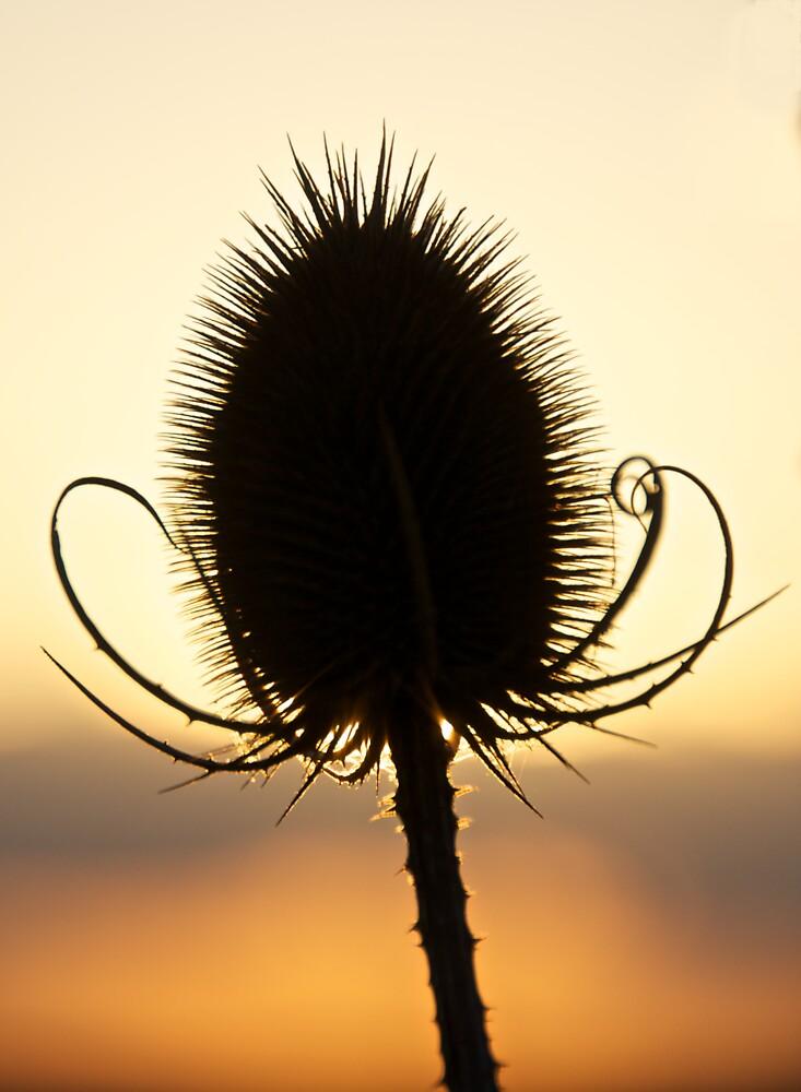Watchin' the sun go down by brilightning
