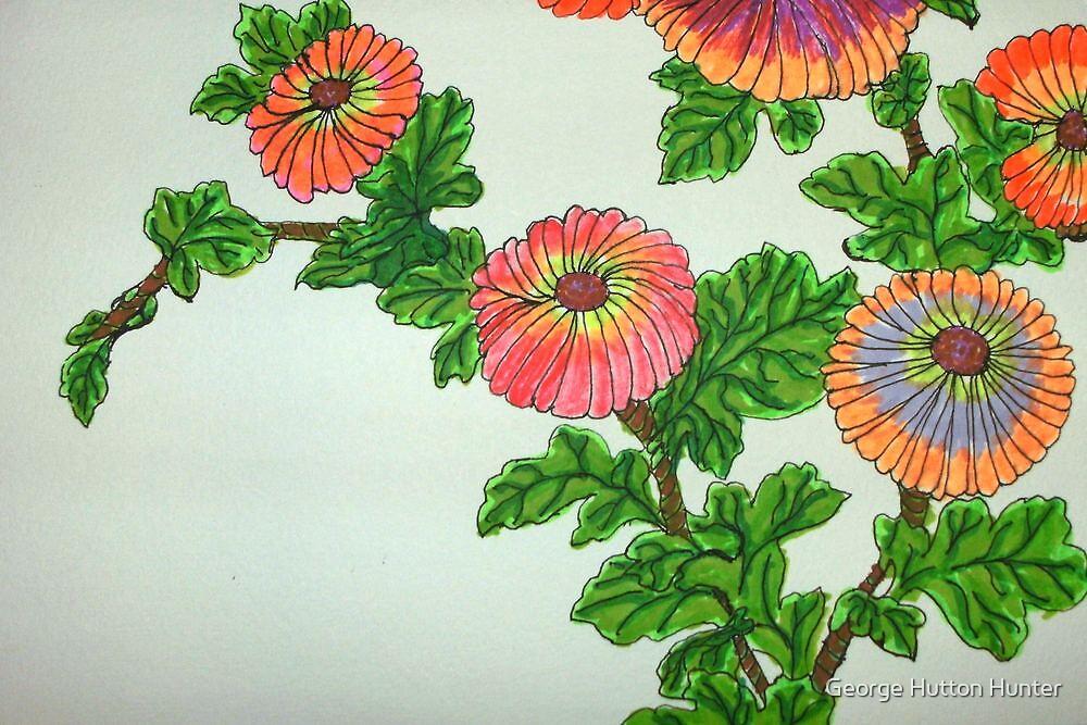 Chrysanthemum carinatum by George Hunter