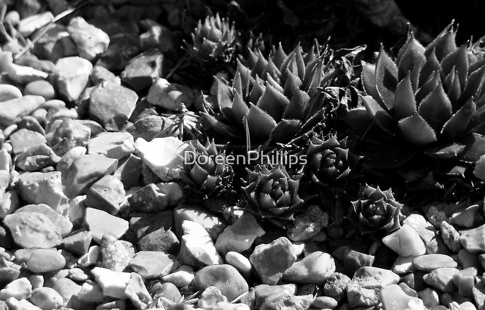 Succulent Pebbles by DoreenPhillips
