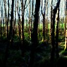 Ballymaloe's Grove by Clayton  Turner