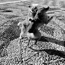 1988 - dog dance by Ursa Vogel