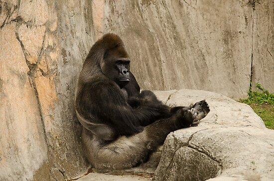 Bored to Death Gorilla  by Chuck Coniglio