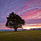 Lone Tree Sunset by fotosic