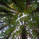 How The Trees Sleep by KateJasmine