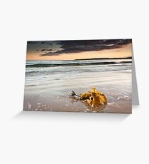 Washed ashore Greeting Card