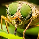 Common March Fly #2 by Kerrod Sulter