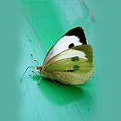 Butterfly by keki
