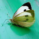 Beauty in a butterfly by keki