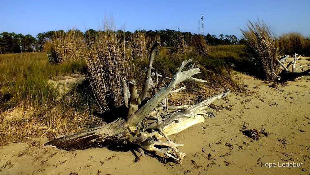 Driftwood on the Edge of the Marsh by Hope Ledebur
