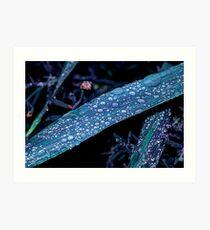Raindrops in HDR Art Print