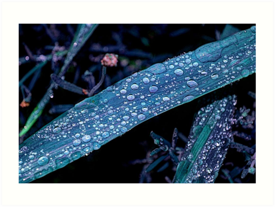 Raindrops in HDR by Tori Snow