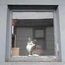 Windows by Jess Meacham