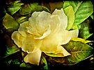 Antique Gardenia Blossom by MotherNature