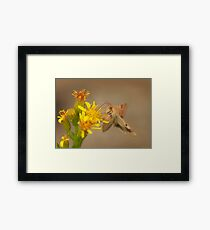 The hummingbird hawk moth Framed Print