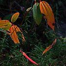 autumn colors by queenenigma