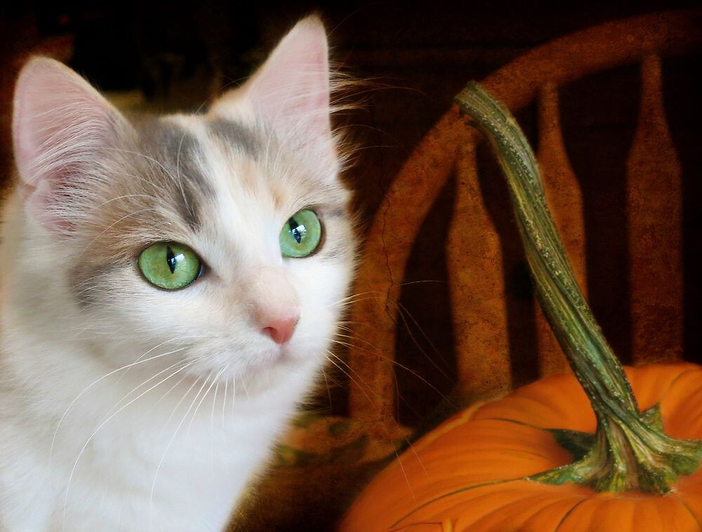 CHECKING OUT THE PUMPKIN by PatChristensen