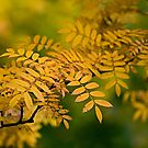Gold and Green by Stuart Robertson Reynolds