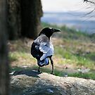 Raven on a rock by Aakheperure