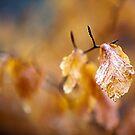 Autumn by Stuart Robertson Reynolds