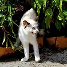 Boo Cat ! by Jan Siemucha