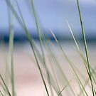 Beach grass abstract by Phillip Shannon